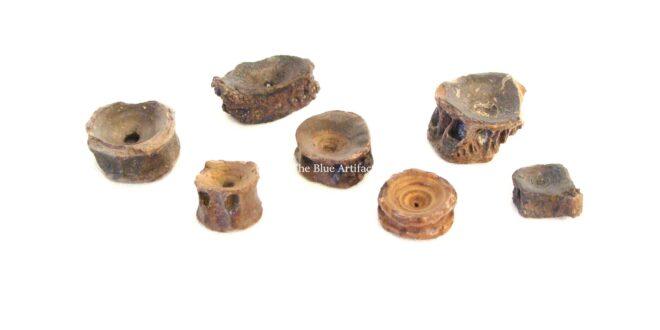 Prehistoric Fish Vertebra