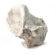 Prehistoric Animal Vertebra