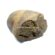 Paleolithic Pebble Chopper