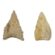 Arrowhead Points